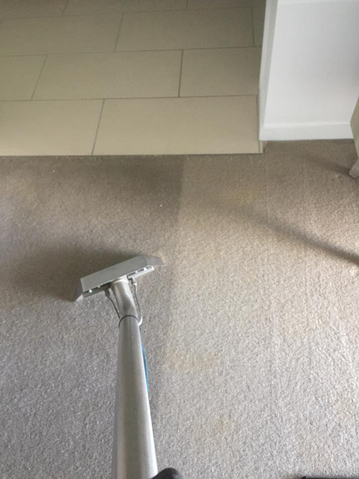 Carpet Cleaning #5